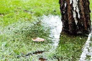 How to Tell if Your Septic Drain Field Needs Repair